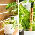 Bayrut-Express-Sprout-Pencil